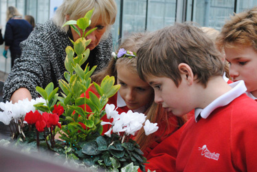 Cairnshill Primary making cyclamen troughs
