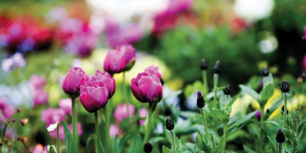 Allianz Garden Show Ireland postponed
