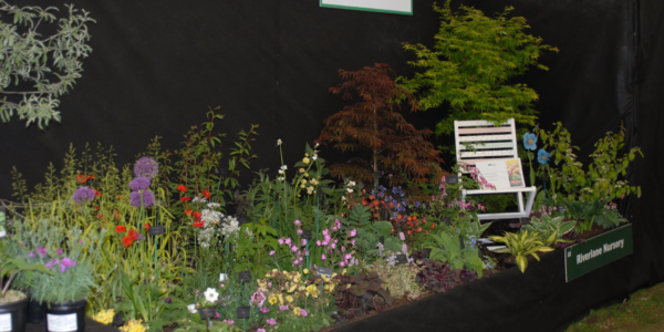 Allianz Garden Show Ireland Garden Winners