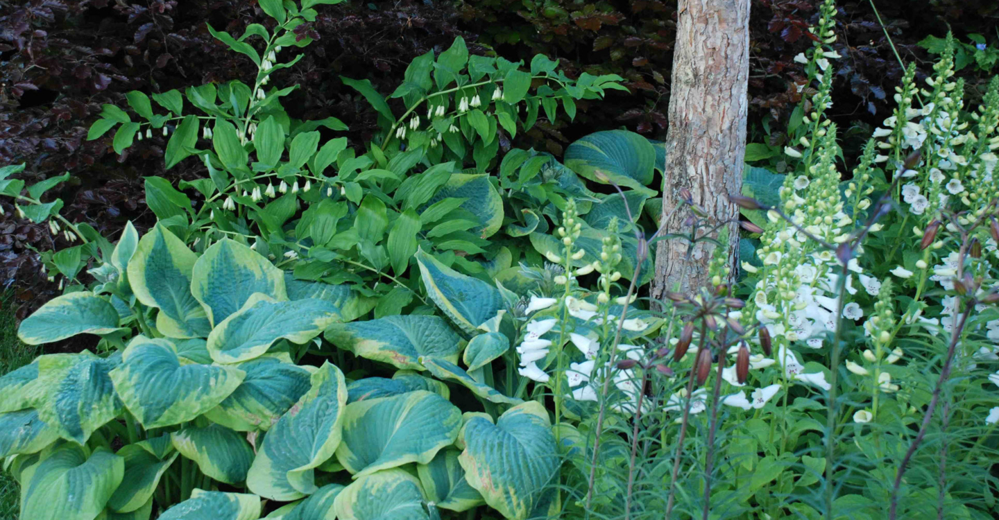 Gardening Guru Tip of the Week – Shady Planting