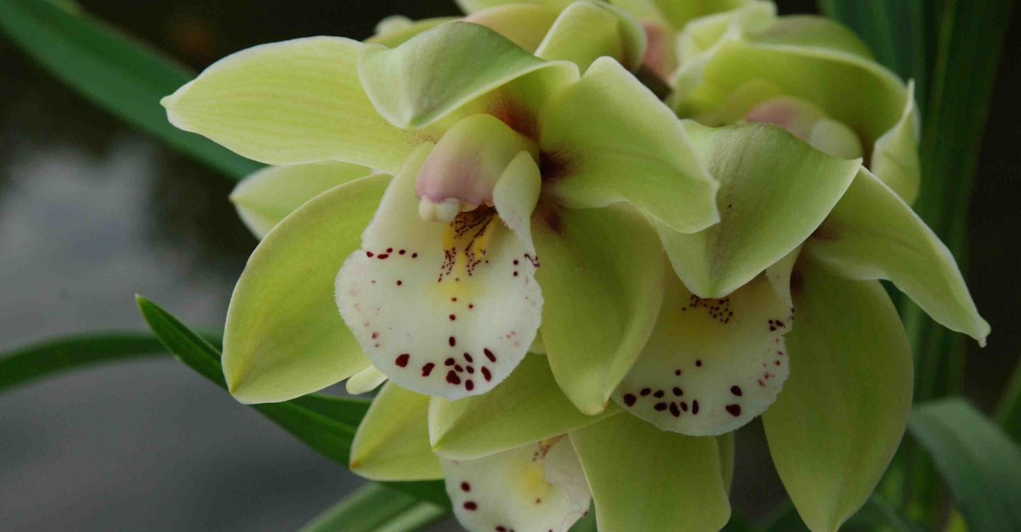 How to care for orchids (part 2 of 2)