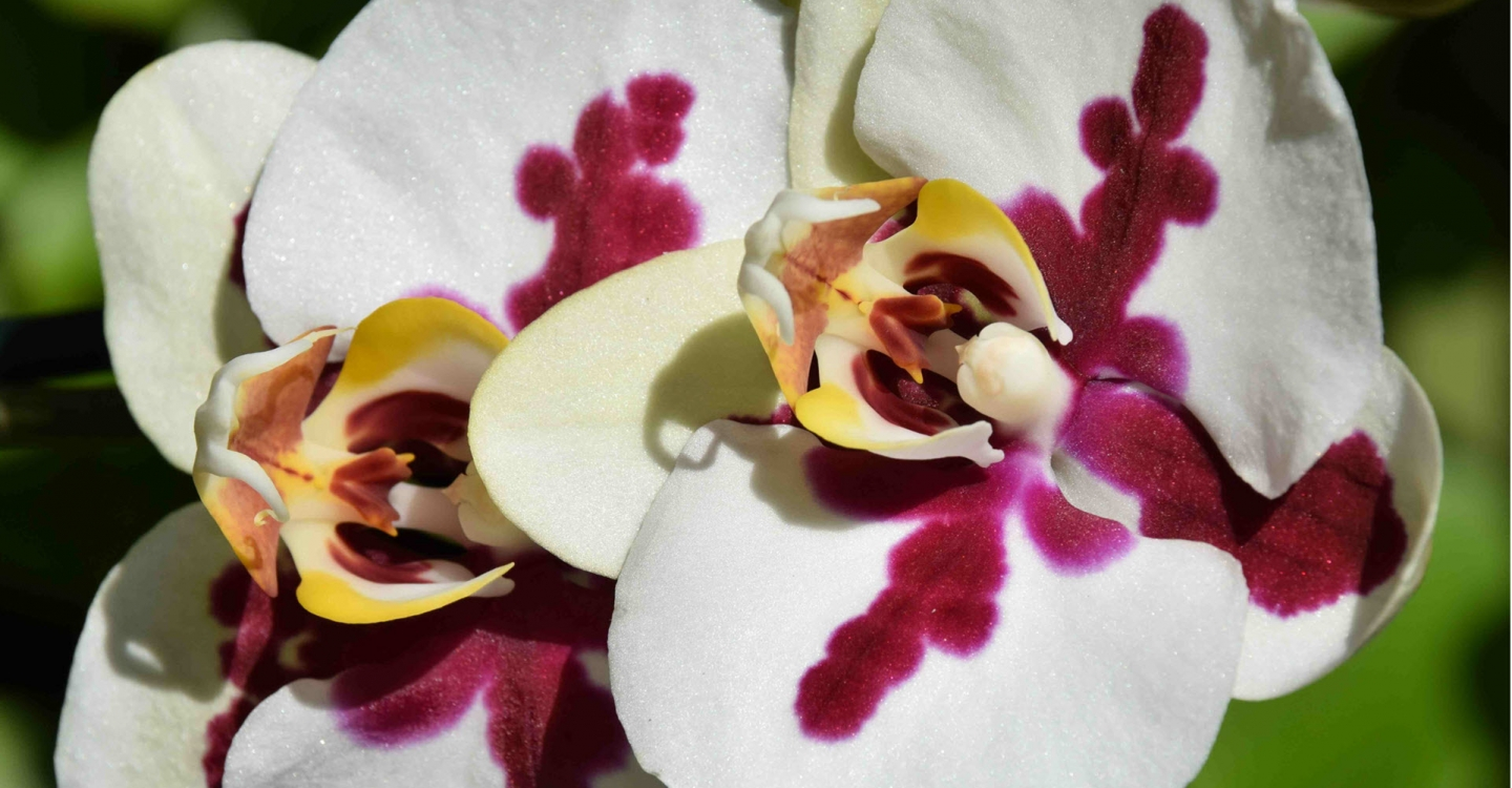How to care for orchids (part 1 of 2)